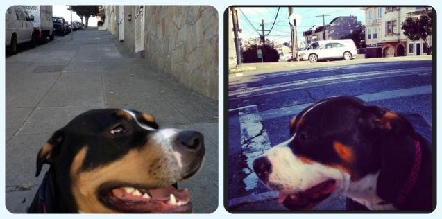 """Rosie at the bottom of the hill (R) and then at the top (L)-Both times she's asking """"Why, mom? Why?"""""""